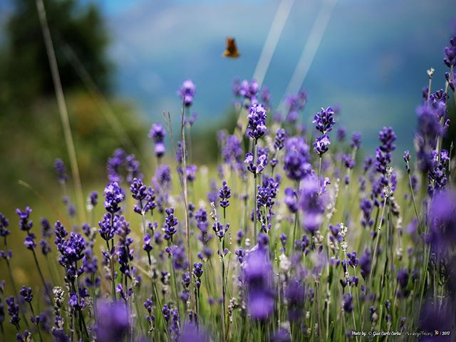 Memories of a beautiful day spent with friends and nature.- 2017 | Gian-Carlo Corba | MonkeyPix.org ThisIsHowISeeTheWorld.com-#Nature #Natura #Italy #Italia #Landscape #Mountains #ValdiSusa #NaturePhotography #Landscape #Green #Lavanda #Lavender #Purple #Flower #Fiori